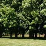 arbres_slider